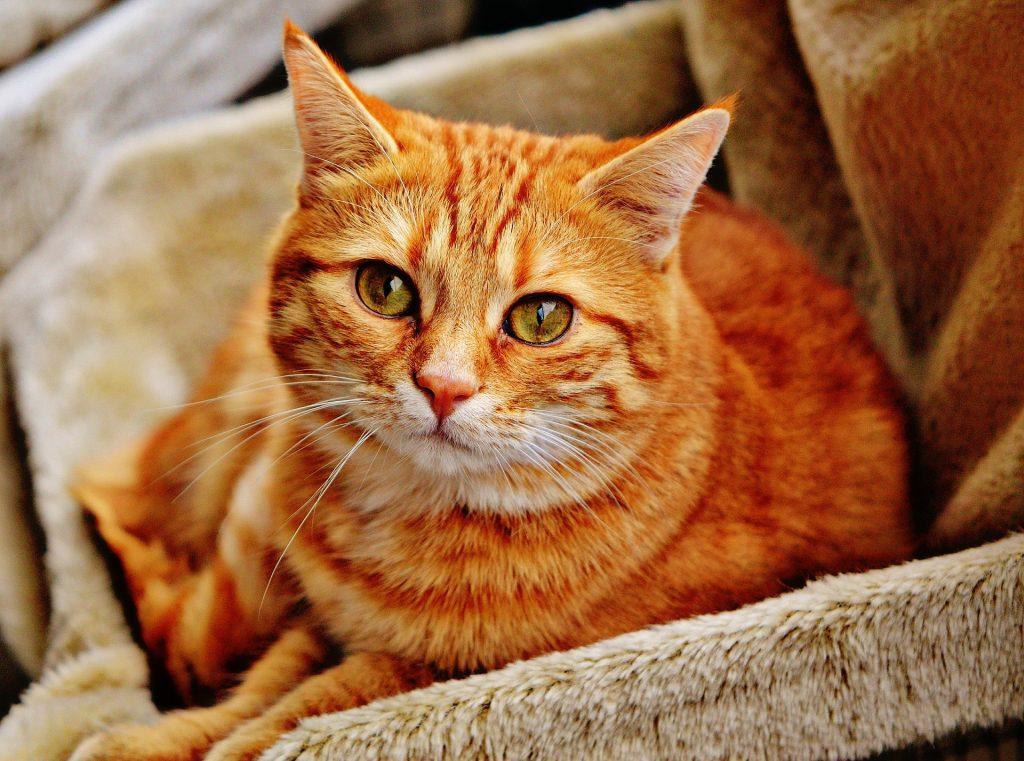 Katze auf Sofa
